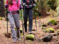 Nordic Walking Stöcke: Test & Empfehlungen (08/21)