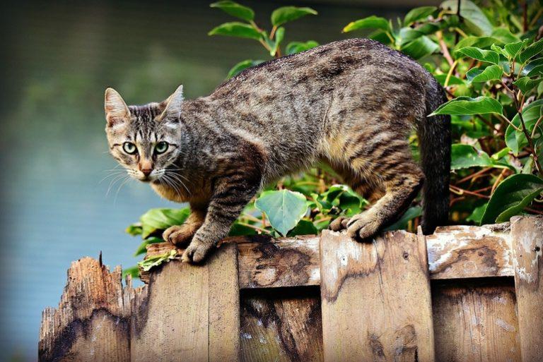 Katzenfutter-1