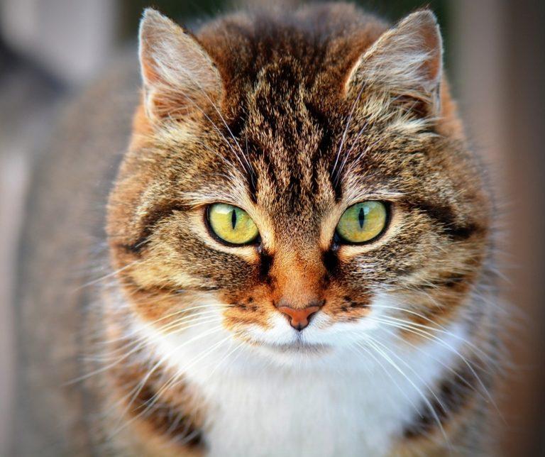 Katzenfutter-3